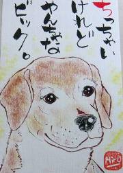 071224suzuki-bikku-bi-guru-boeogu.jpg