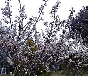 0803_hirosegawa-haru.jpg