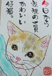 0805kakuya-koneko.jpg