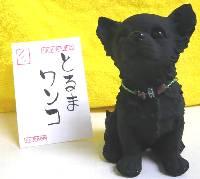 tiwawa-toruma-wannko-burogu.jpg