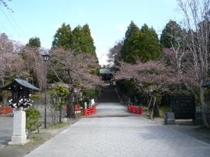 140410toushouguu-wsakura1